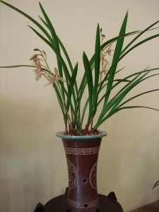 ASIAN ORCHID 01