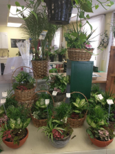 assorted dish gardens