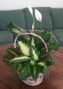 Assorted Green Plants Basket