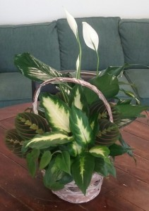 Assorted Green Plants Basket