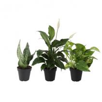 Assorted Green Plants Plant