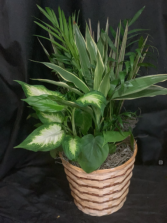 Assorted green plants  Plants