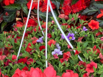 Assorted Hanging Baskets - Call for availability