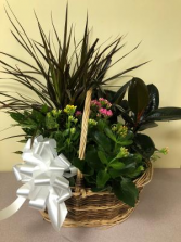ASSORTED PLANT BASKET PLANT