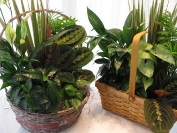 Assorted Planters Basket  Dish Garden Plant Arrangement