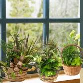 Assorted  Plants  in a Basket
