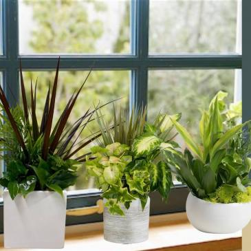Assorted Plants in a Ceramic Pot