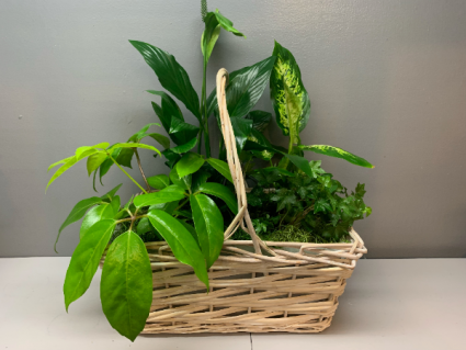 assorted plants in white basket 17