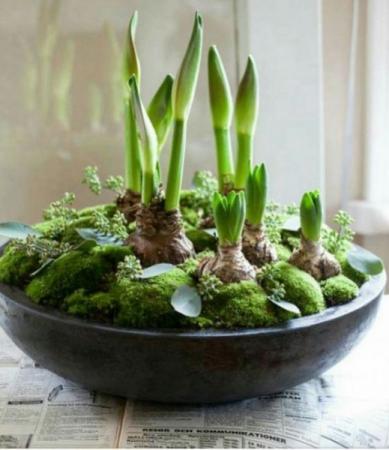 Assorted Spring Bulbs Arranged