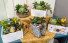 Assorted Succulent Box