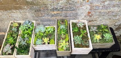 Assorted Succulent Gardens
