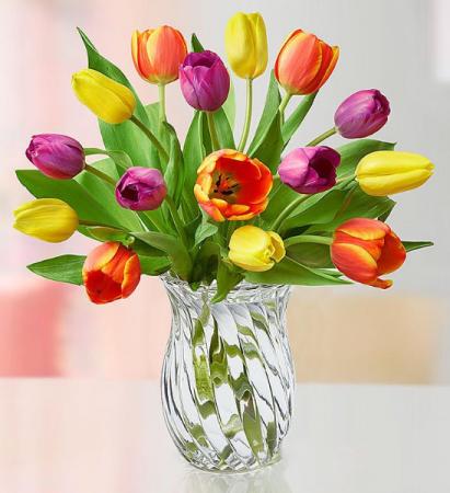 Assorted Tulips
