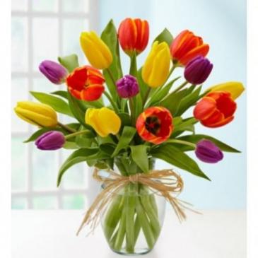 Tulip Rainbow surprise Tulips