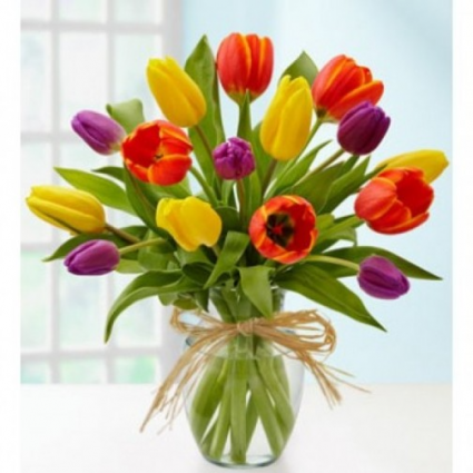 Tulip Rainbow surprise