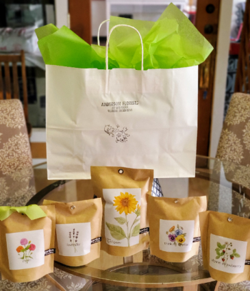 Assortment Growing Plants kit GIFT BAG