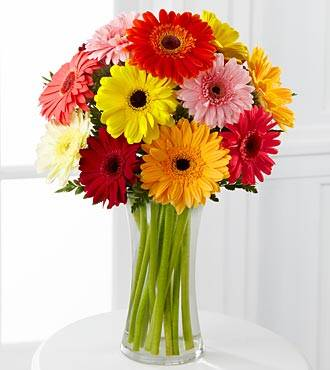 Asst. Color Gerbera Daisies Vased Arrangement