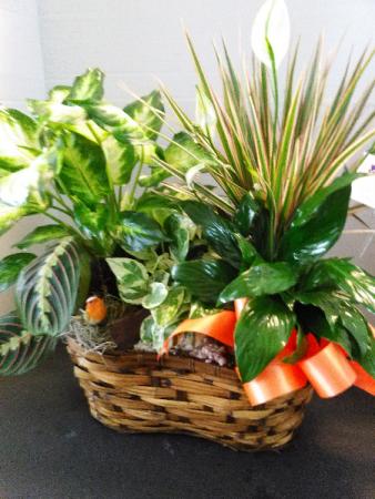 Autumn Dish Garden Live Plants