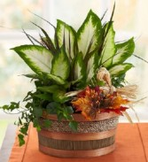 Autumn dishgarden planter Planter