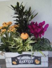 AUTUMN  HARVEST BOX Mixed Plants