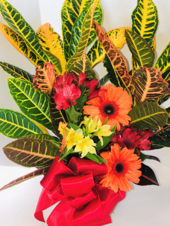 Autumn in Color Croton  In House Special