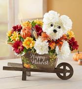 Autumn Joy Pup Keepsake Harvest Cart