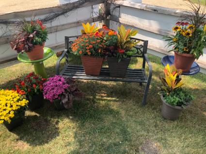 Autumn Porch Pots