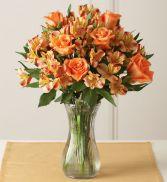 Autumn Rose Splender