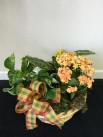 Autumnal Traditions Autumn plant basket