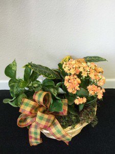 Autumnal Traditions Autumn plant basket
