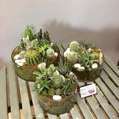 Jade Garden Set