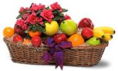 Azaela Plant and Fruit Basket Gift Basket