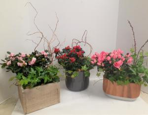 Azalea Garden  in Tottenham, ON | TOTTENHAM FLOWERS & GIFTS