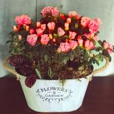 Azalea Planter Plant