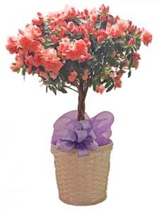 Azalea Topiary Decorative Tree