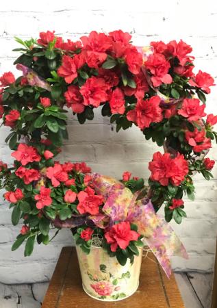 Azalea Wreath Plant