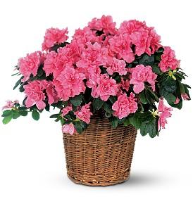 Azelea Plant Basket