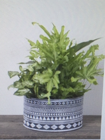 AZTEC METAL PLANTER Dishgarden