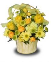 BASKET OF YELLOW POSIES Flower Arrangement