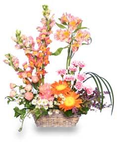 Inspiration blooms in springtime in spring green wi prairie flowers inspiration blooms in springtime mightylinksfo