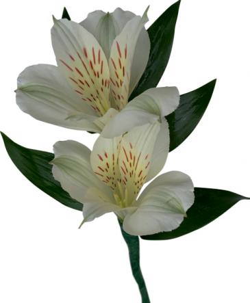 B33-16 Alstroemeria Lily Boutonniere