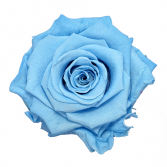 Baby Blue Rose