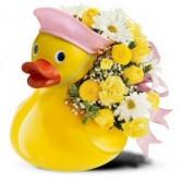 Baby Duck Fresh