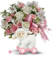 LITTLE LAMB BABY GIRL  Baby Girl