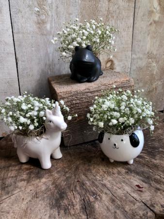 Baby's Breath Critters Arrangement in ceramic pot