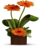 SUNSHINE CONTEMPORARY  FLOWER ARRANGEMENT