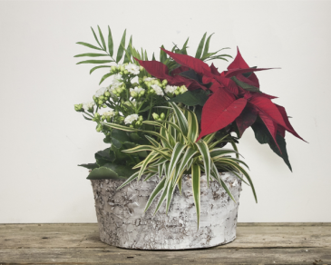 Bark planter Christmas