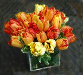 Barrage of Tulips!