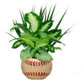 Baseball Planter Indoor Plants