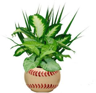 Baseball Planter Indoor Plants