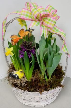 Basket Bulb Garden Bulb Plants in Fulton, NY - DeVine Designs